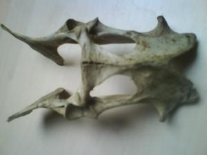 Knochenfund - Nahaufnahme von oben