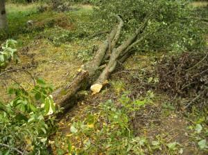 Zweiter Birnbaum